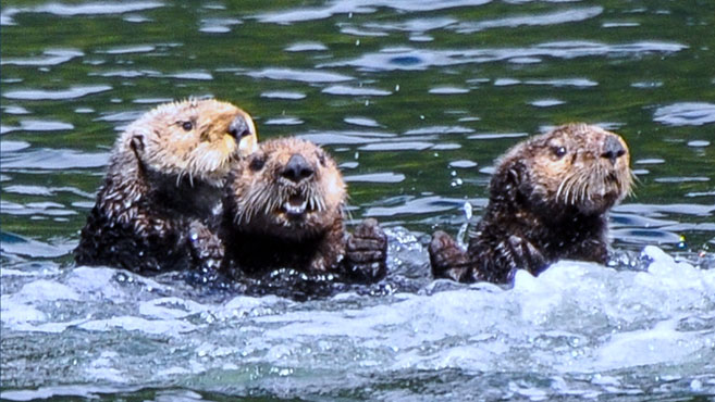 A New Way to Digitise Your Law Practice: Otters Job Requests Forms